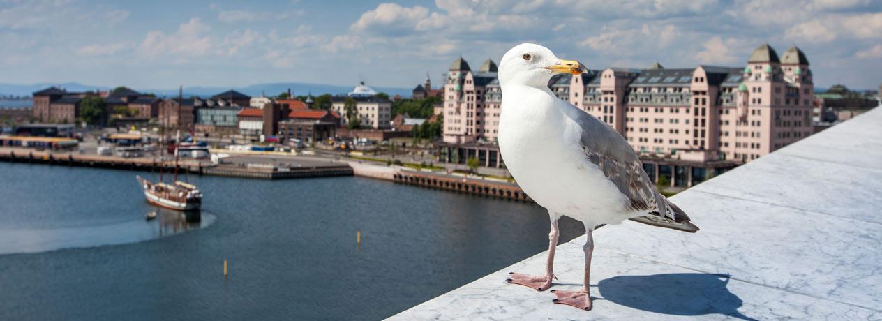 Mit AIDA die Naturschönheiten Norwegens entdecken